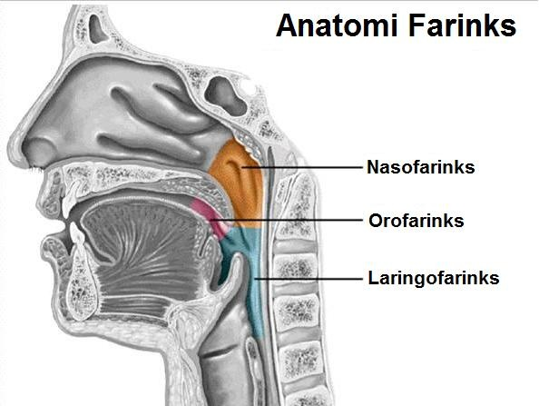Kanser Pangkal Hidung