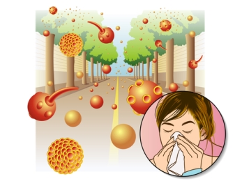 Antihistamines in children - PORTAL MyHEALTH