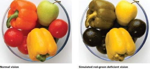 Apakah perbezaan warna bagi pemandu yang mengalami masalah rabun warna2