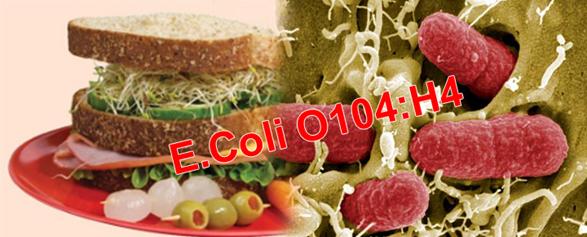 Escherichia coli O104-H4