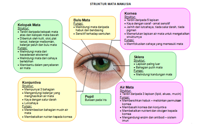 Kenali Struktur Mata Anda1