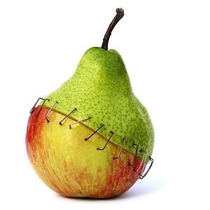 Makanan Terubah Suai Genetik