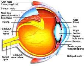 Rajah struktur anatomi bola mata