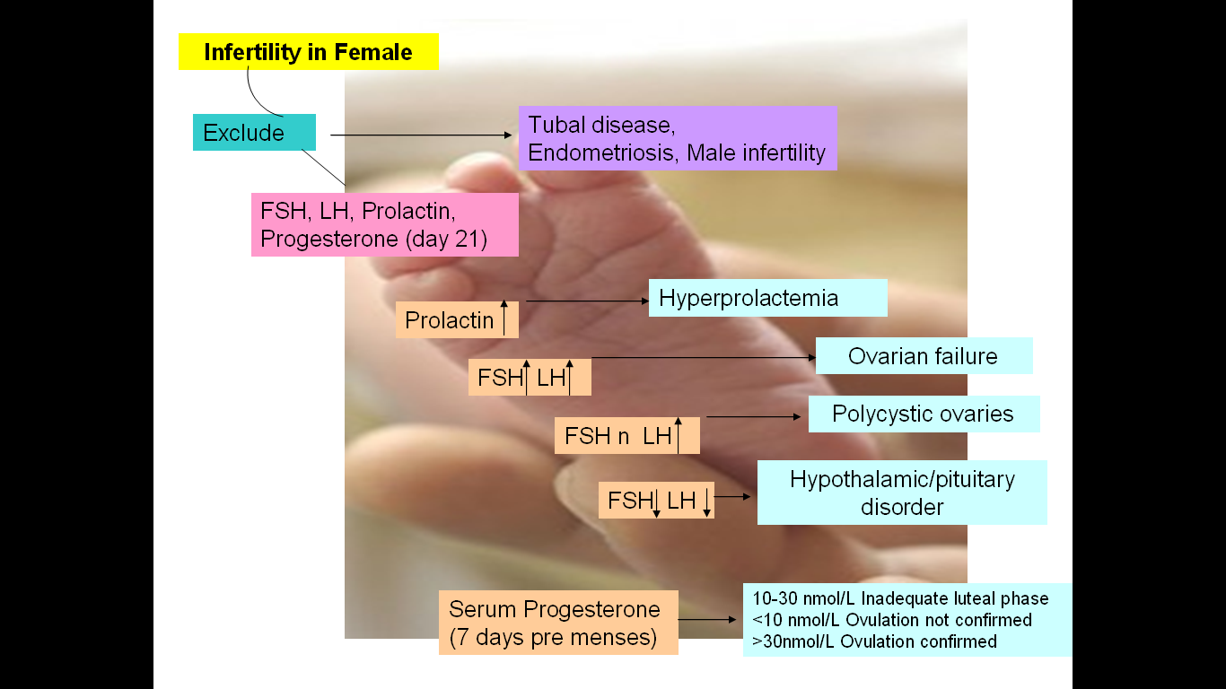 Suggested scheme for evaluation of infertile female