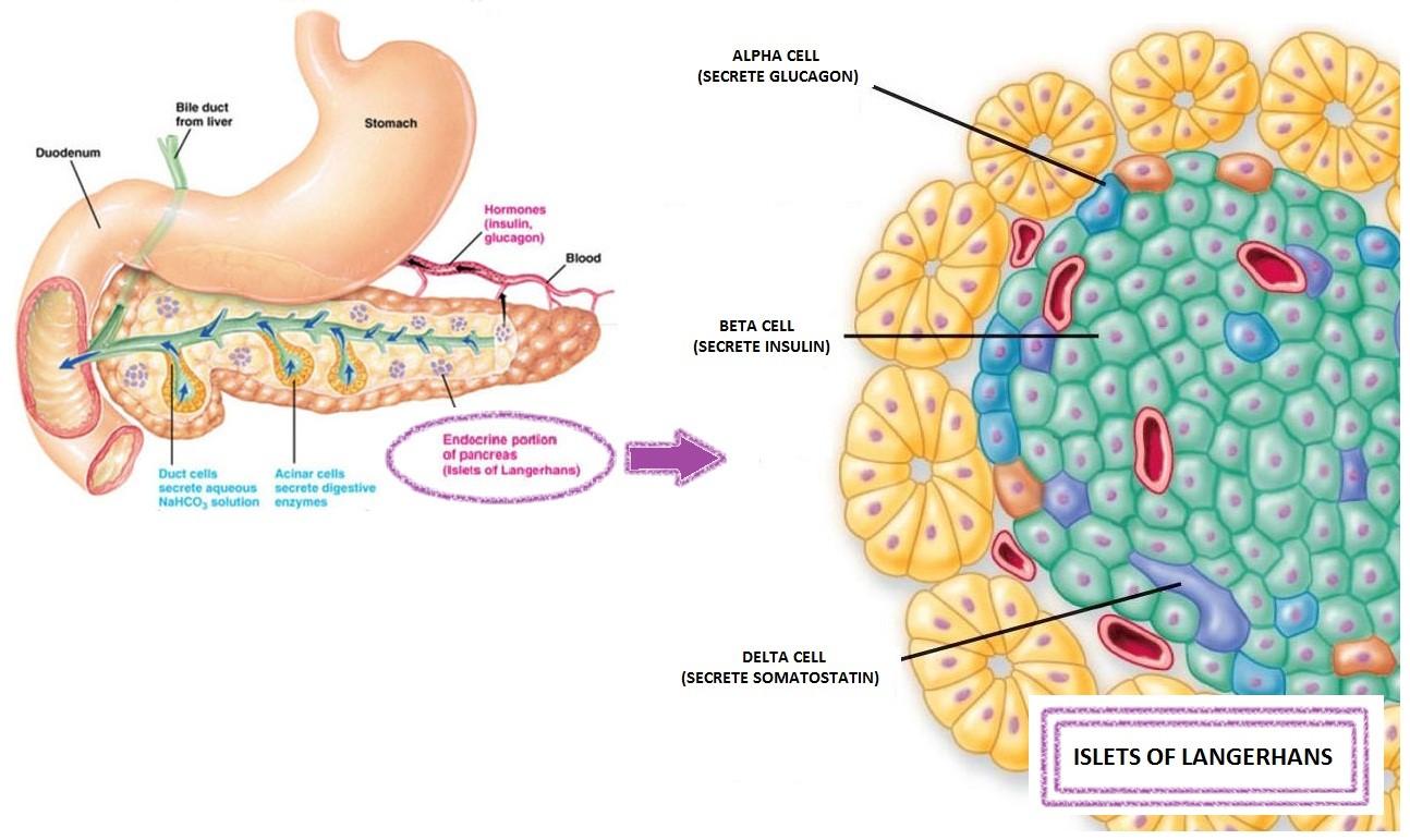 insulinmeasurement1