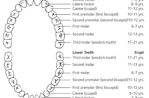 Masalah Berkaitan Pertumbuhan Gigi Portal Myhealth