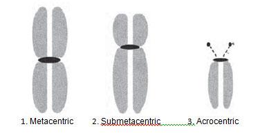 kromosom3(bi)