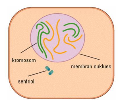 kromosom5