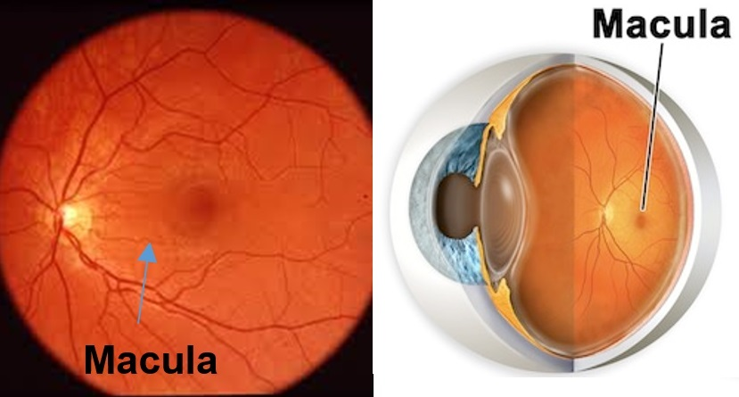 ophthalmologist albuquerque nm high country macula - 829×445