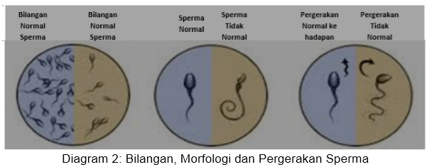 male-fertility-2 (bm)
