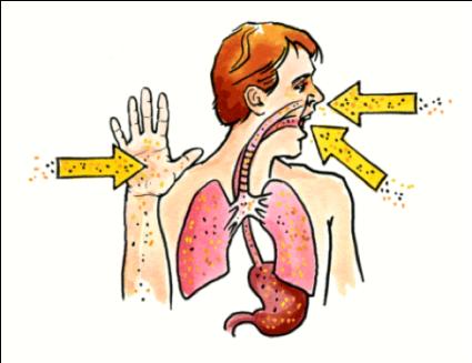 pernafasan