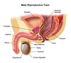 Kanser Prostat Portal Myhealth