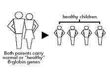 Pre-Marital Screening for Thalassemia - PORTAL MyHEALTH